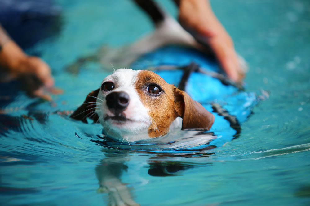 Hydrotherapy for dog wellness