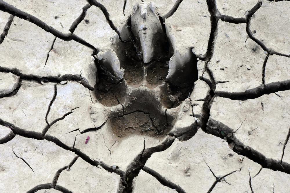 Dog Paw Cracks