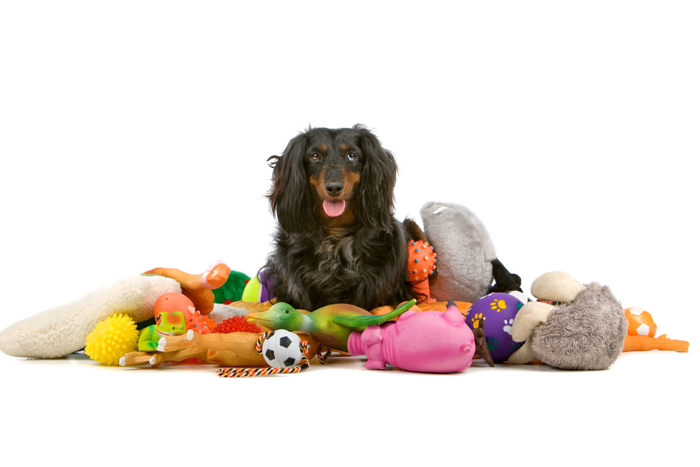 dog toys that are interactive