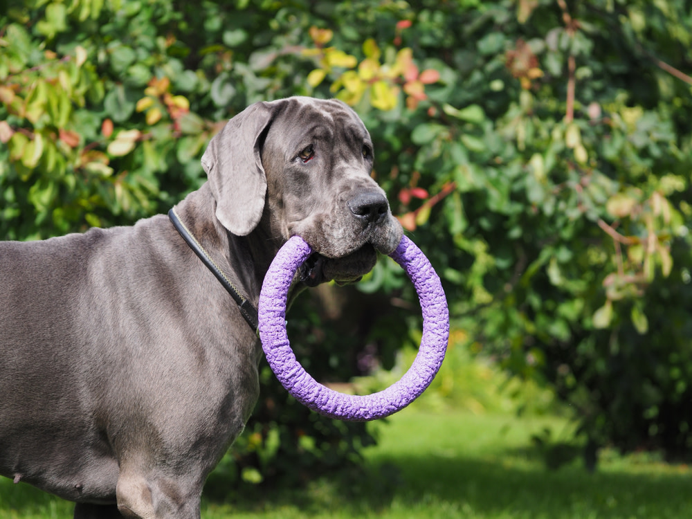 joint supplements for dog health