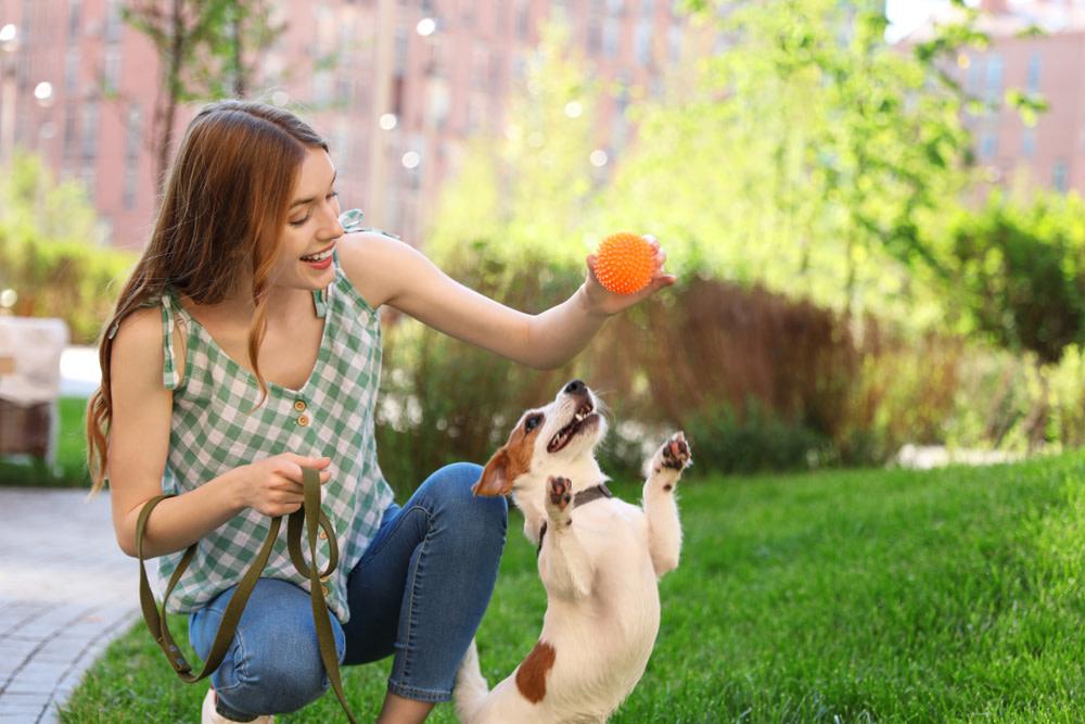 increase dog activity to reduce dog farts
