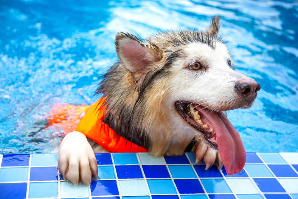 dog swimming in hydrotherapy pool