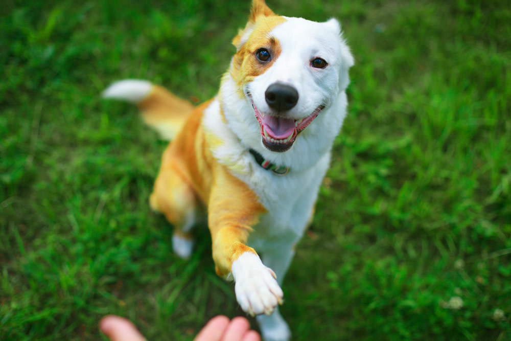 What to Look for in Quality CBD for Dogs