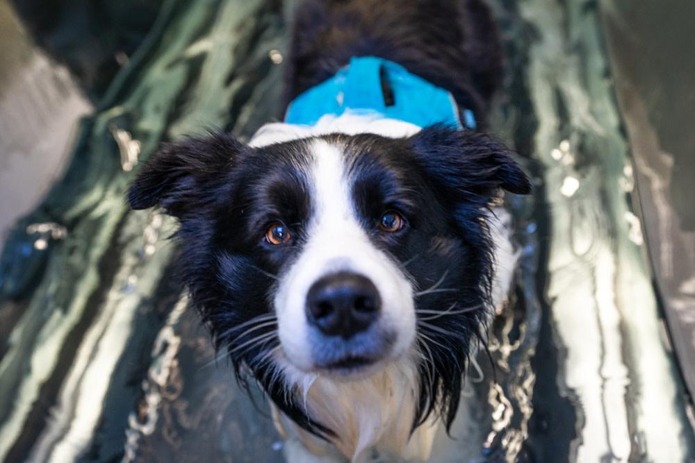dog hydrotherapy treadmill