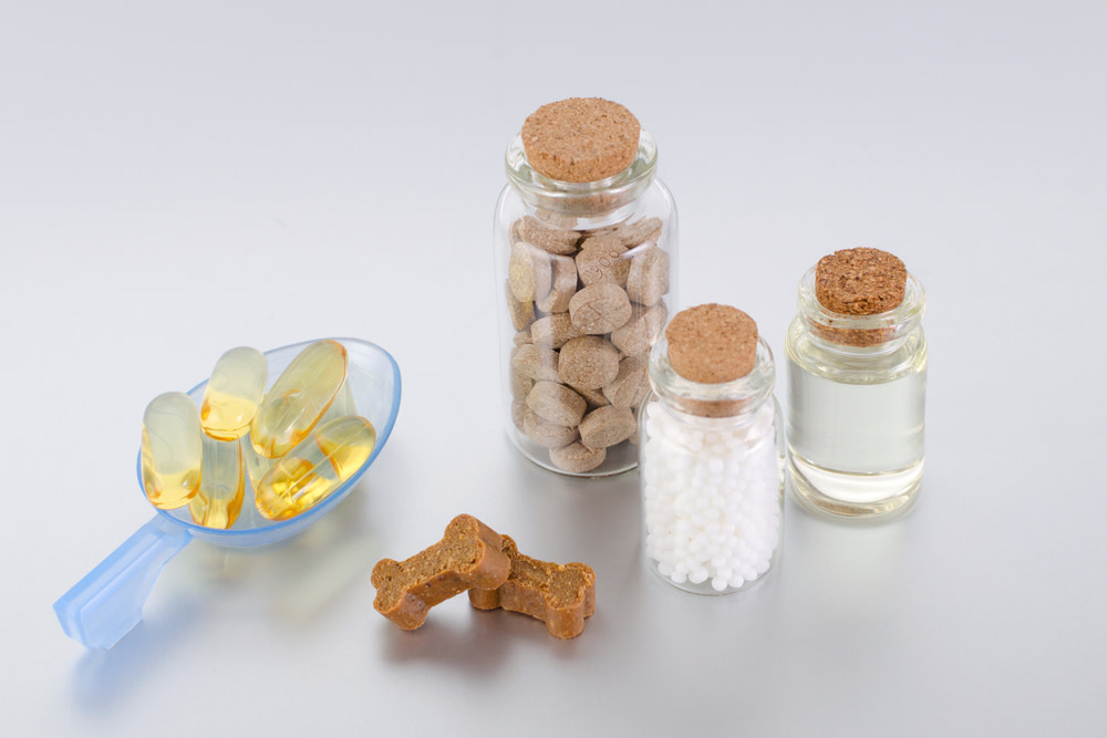 Supplements to Boost Your Dog's Immune System