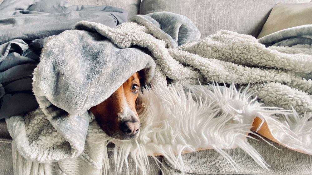 5 Tips for Calming Down an Anxious Dog