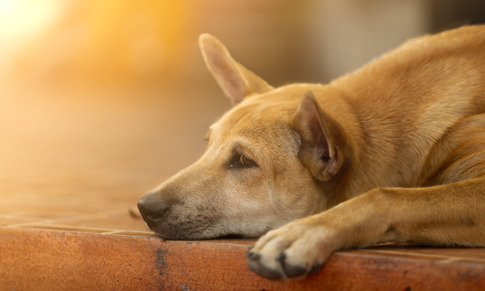 Signs Your Dog Might Have Cancer