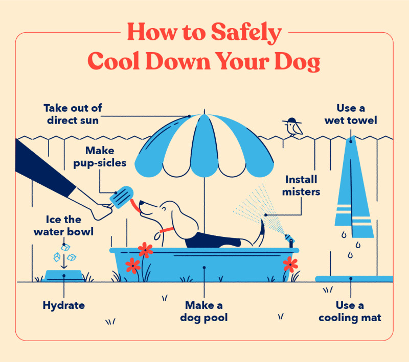 A list of tips for how to safely cool down your dog including, using a cooling make, taking your pup out of direct sunlight and hydrating