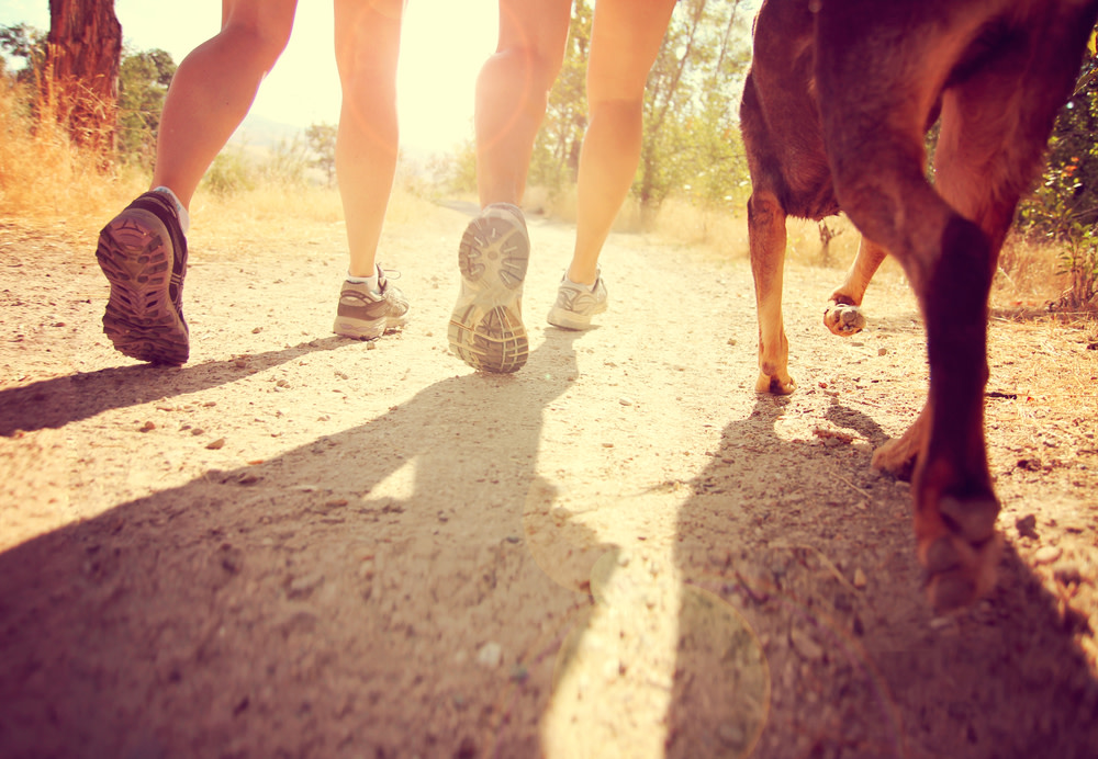 Monitoring Your Dog's Joint Mobility