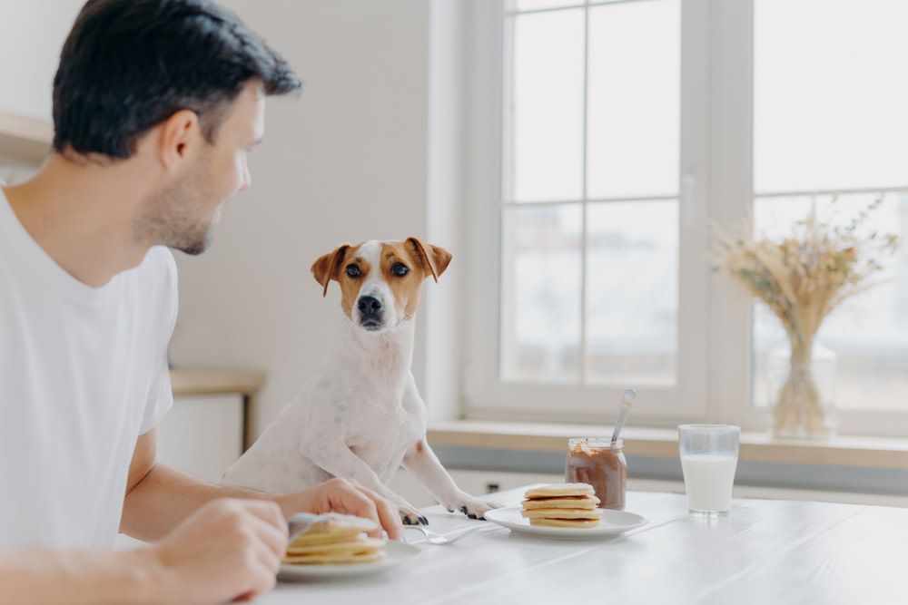 dog and owner drinking milk