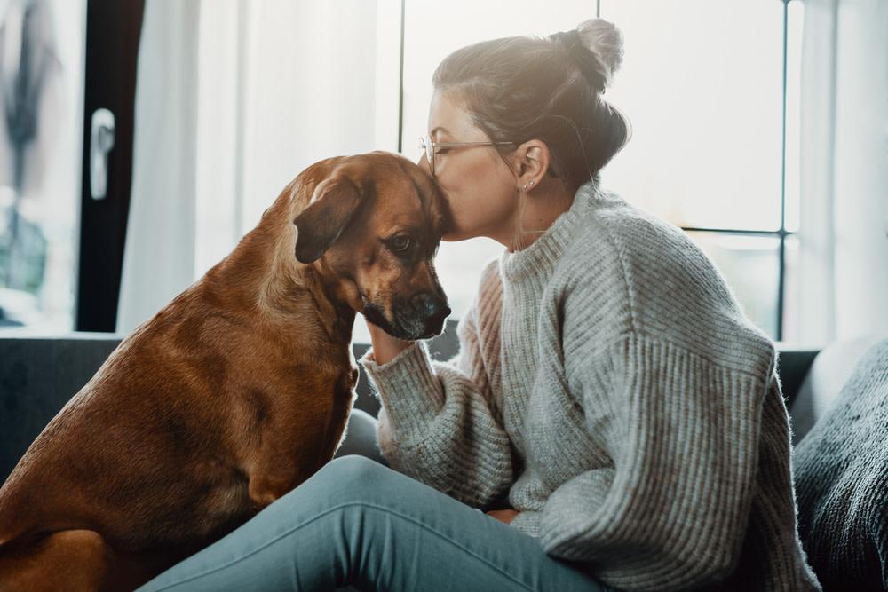CBD Dog Treats for Anxiety