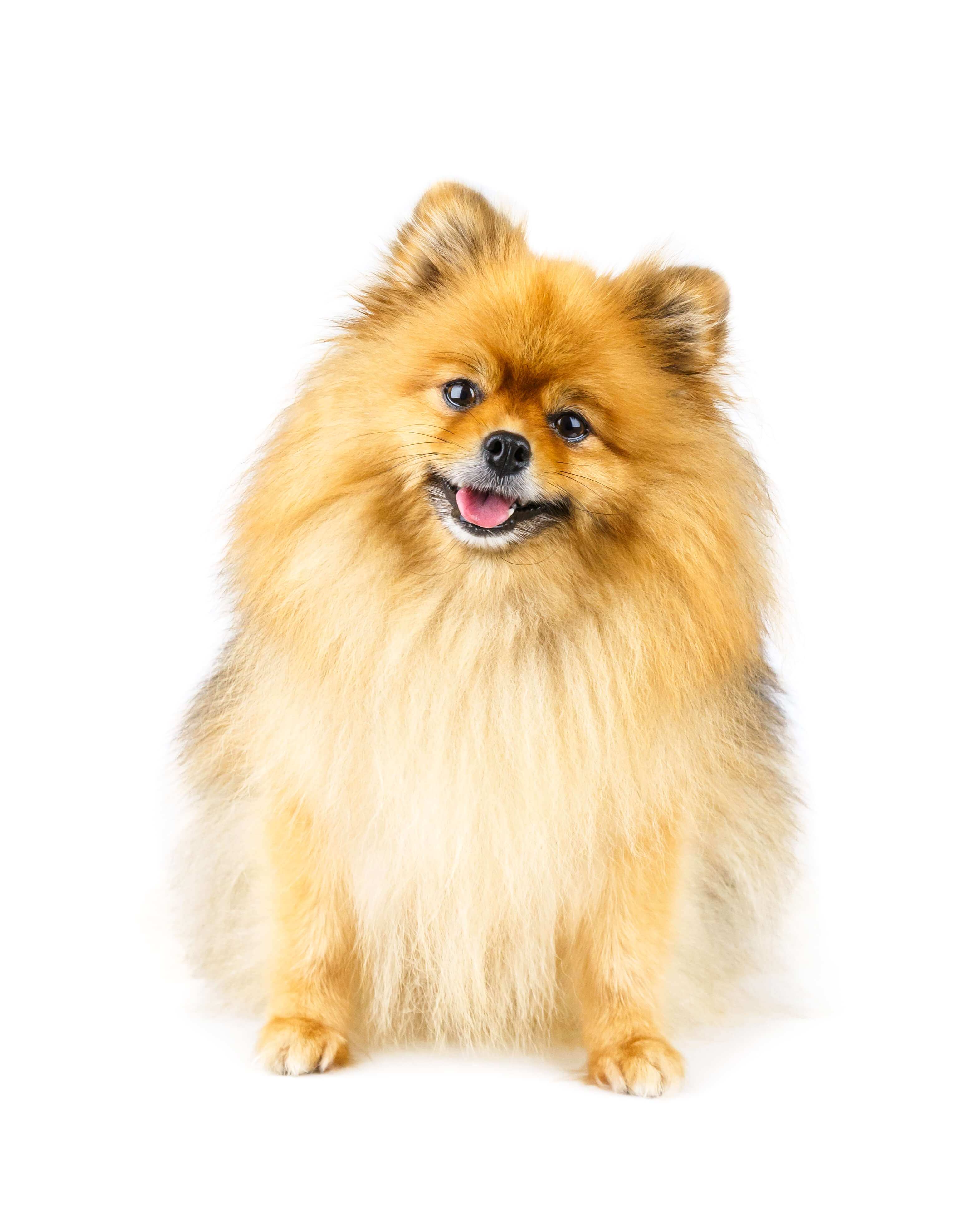 happy healthy dog
