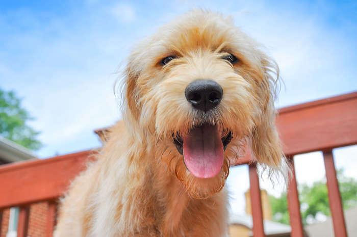 Best CBD for Dogs: Honest Paws carries CBD Oils, Hemp Chews, and CBD Bites!