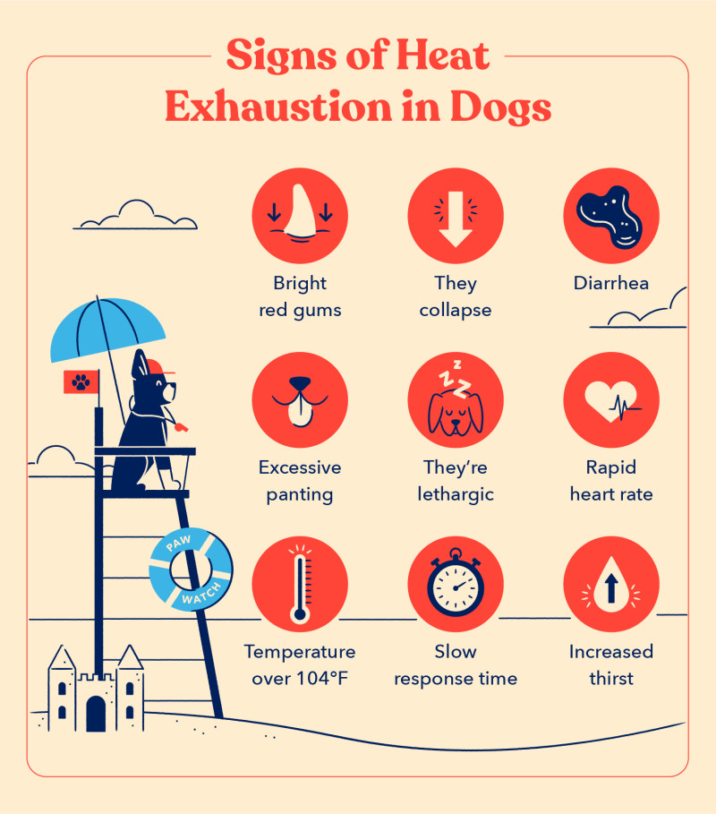A list of the signs of heat exhaustion in dogs including bright red gums, diarrhea and increased thirst