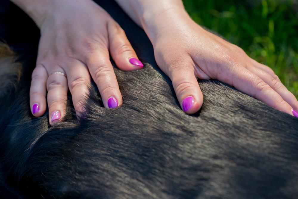 dog massages