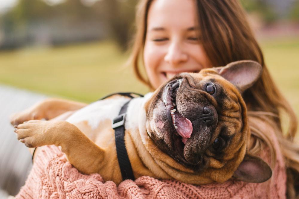 Happy dog using CBD treats