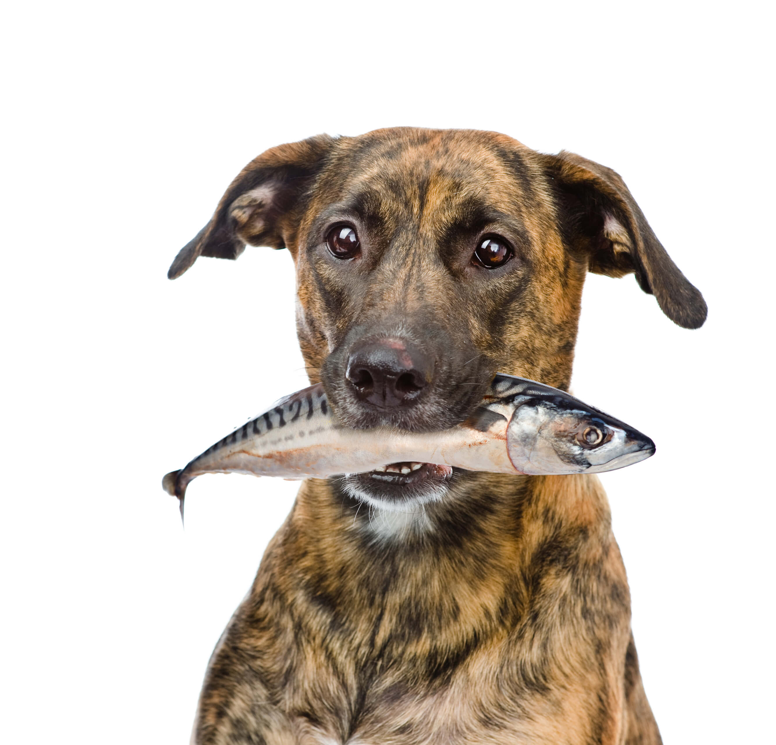 dog with fish in mouth