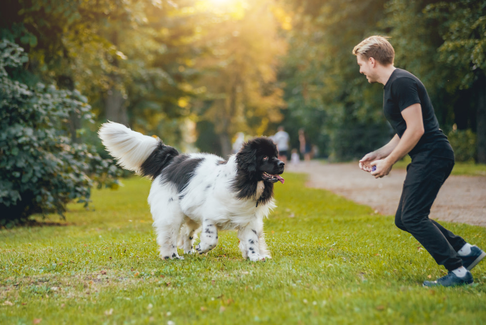 joint supplements for dogs
