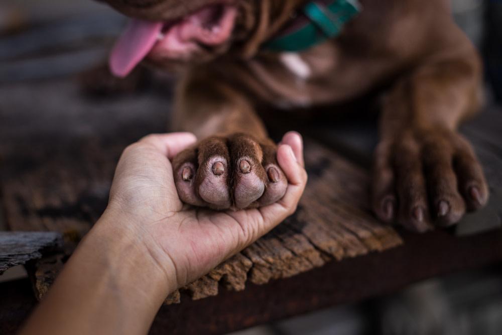 cbd for dogs with arthritis