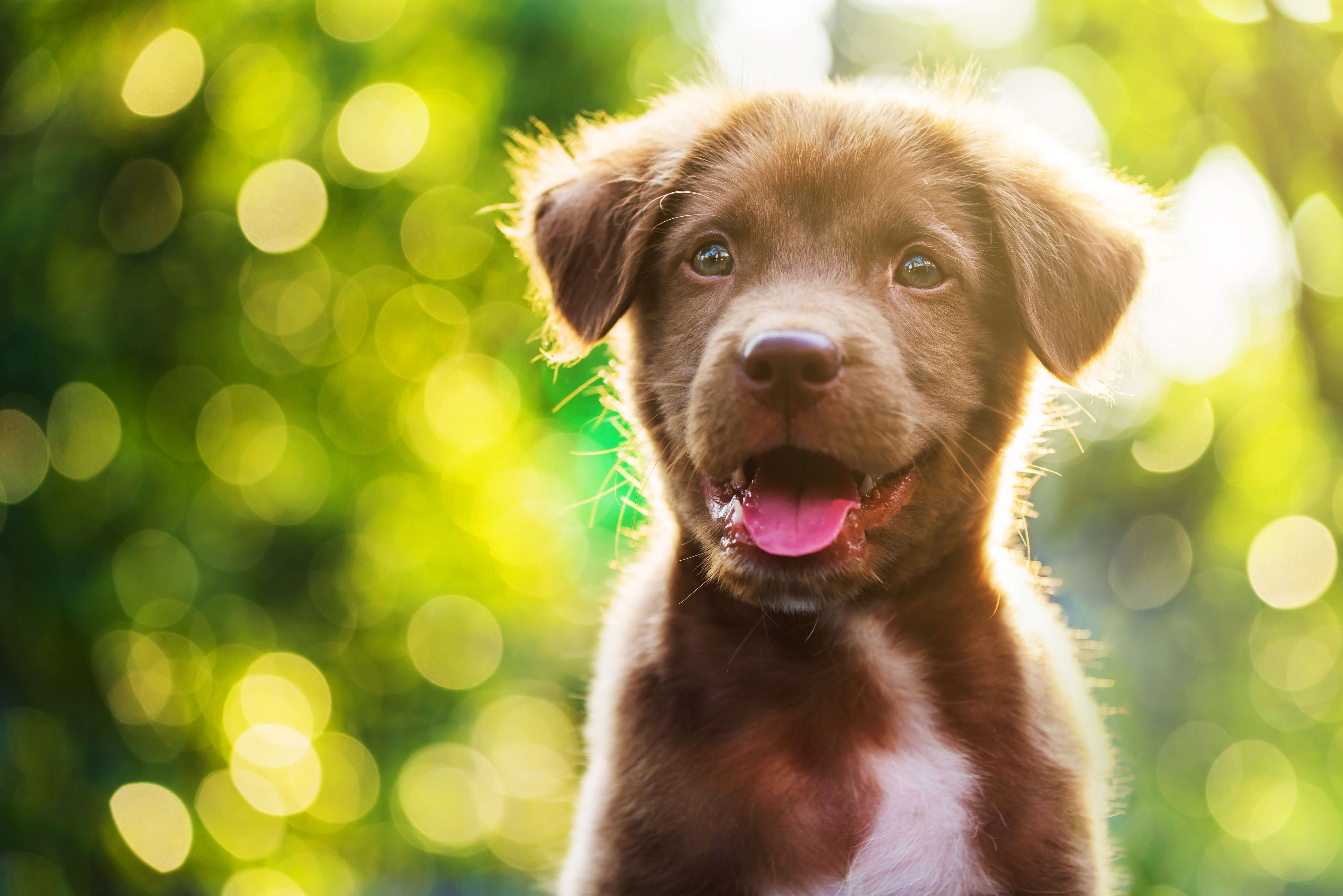 Ashwagandha for Dogs can help dogs manage normal stress.