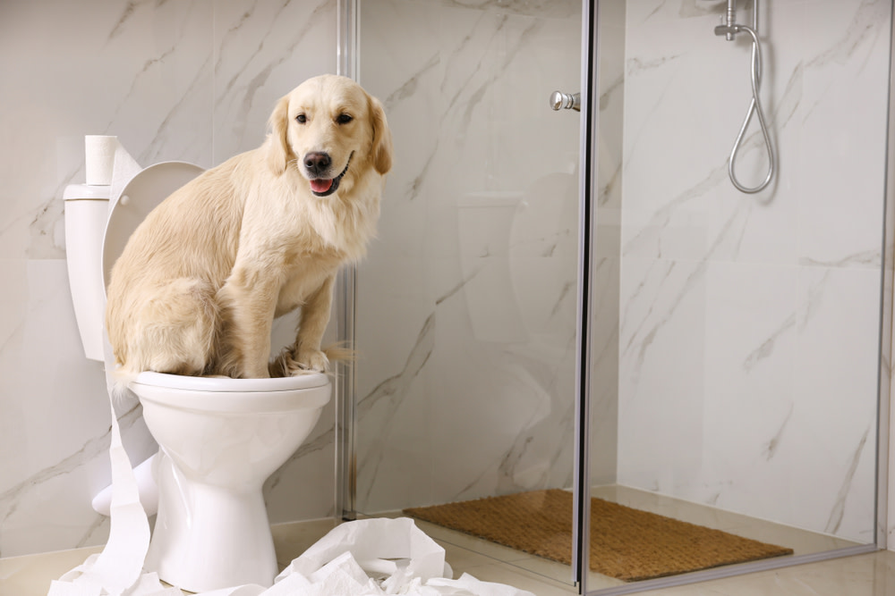 dog going to the bathroom