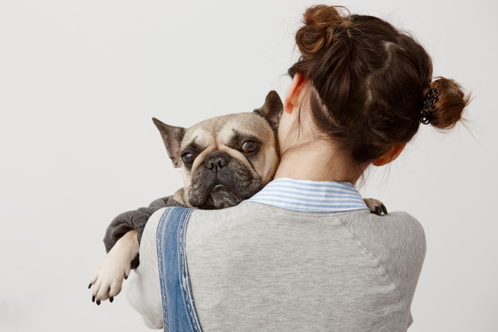 Most Common Types of Cancer in Dogs