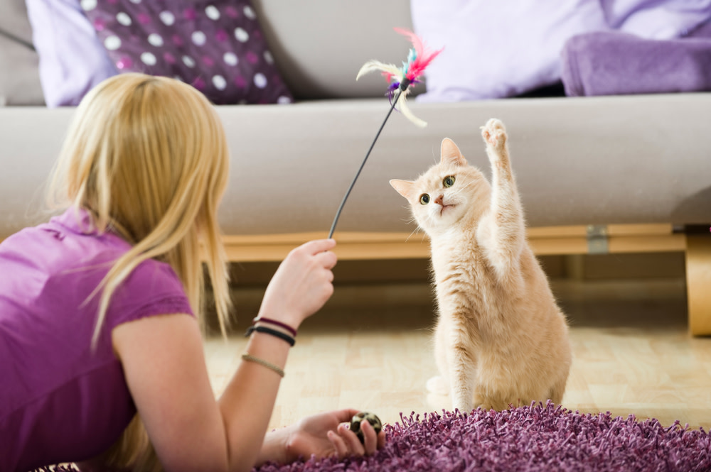 fun cat activity to help anxiety