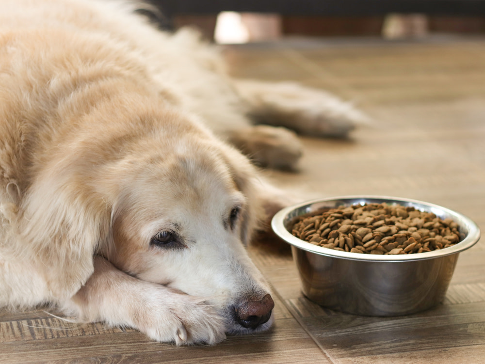 asking a vet about dog bloating