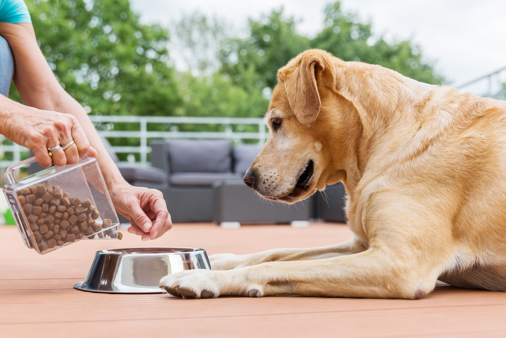 daily antioxidants for dogs