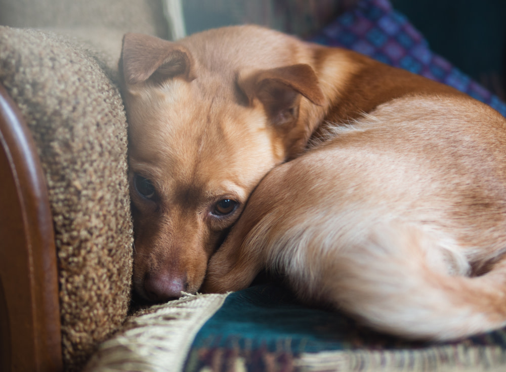 What to Know About Dog Anxiety