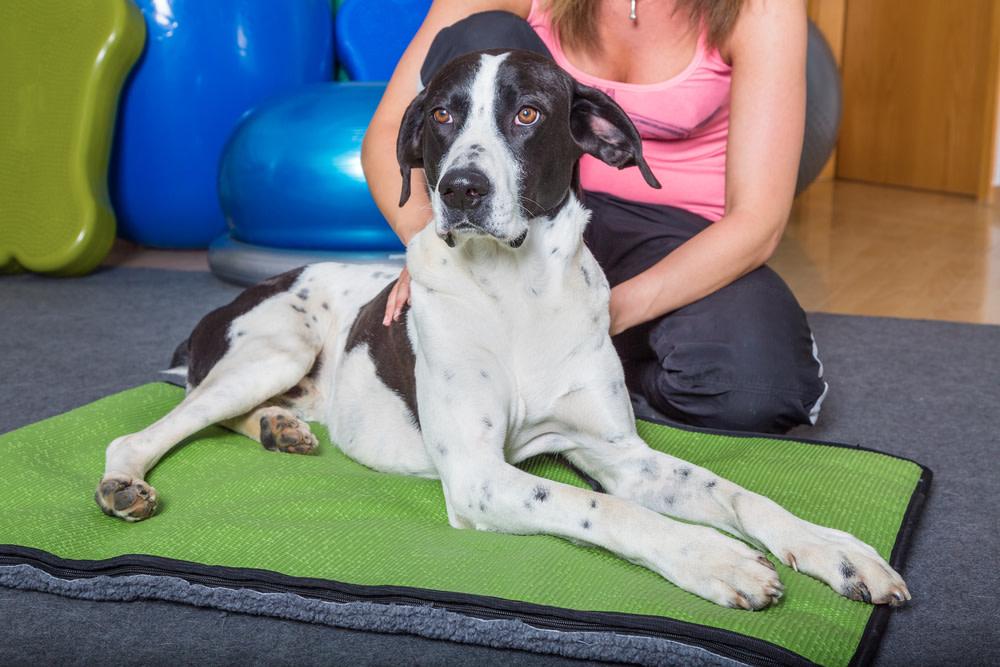dog massage techniques