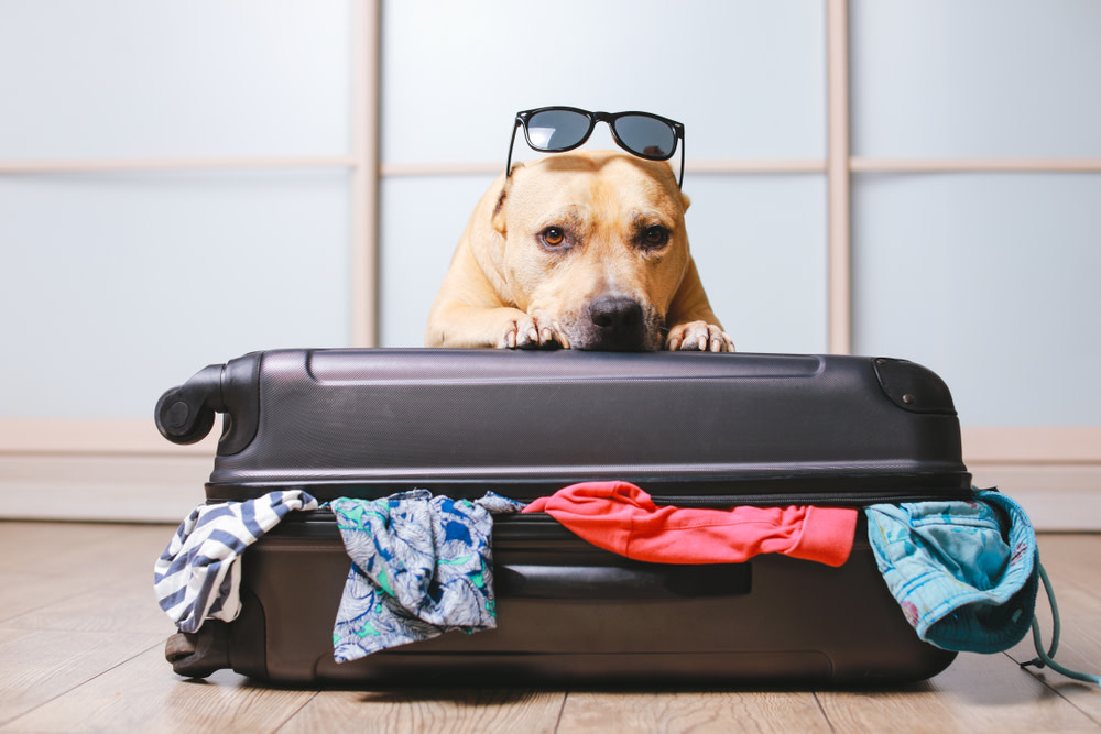 dog anxious about traveling