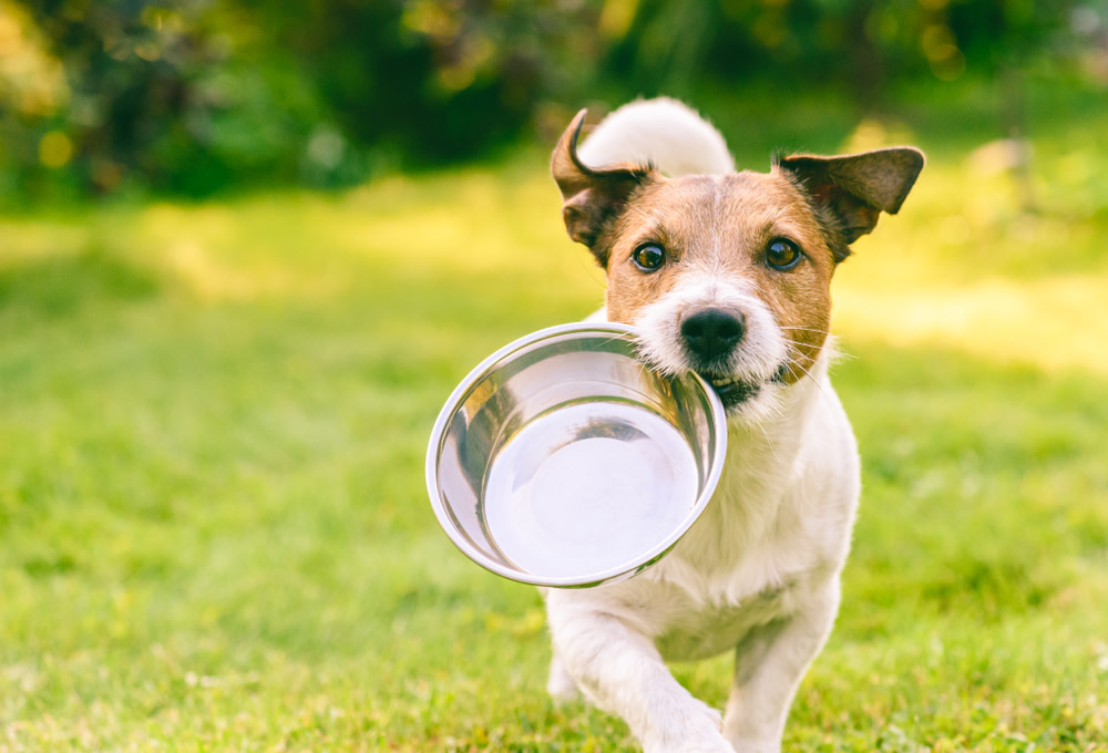 How a Dog's Digestive System Works
