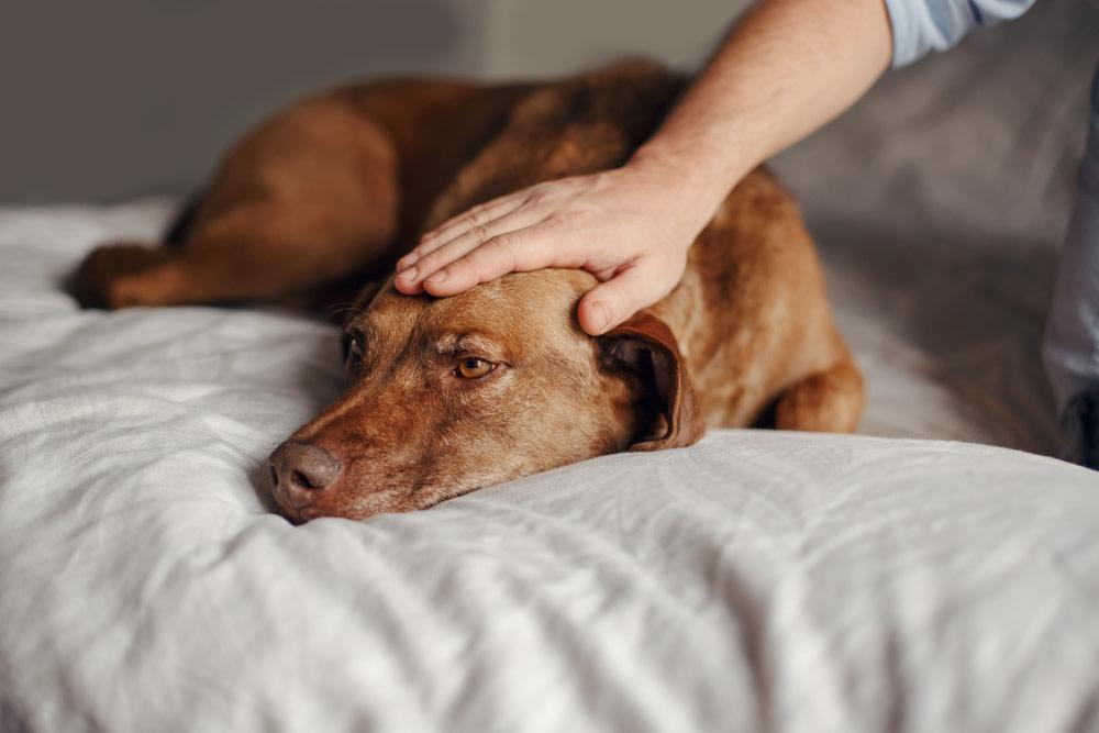CBD Dog Treats for Seizures