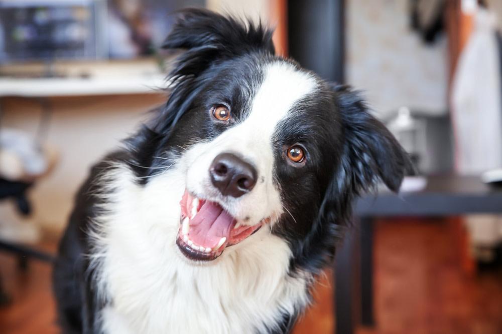 How Can CBD Peanut Butter Help My Dog