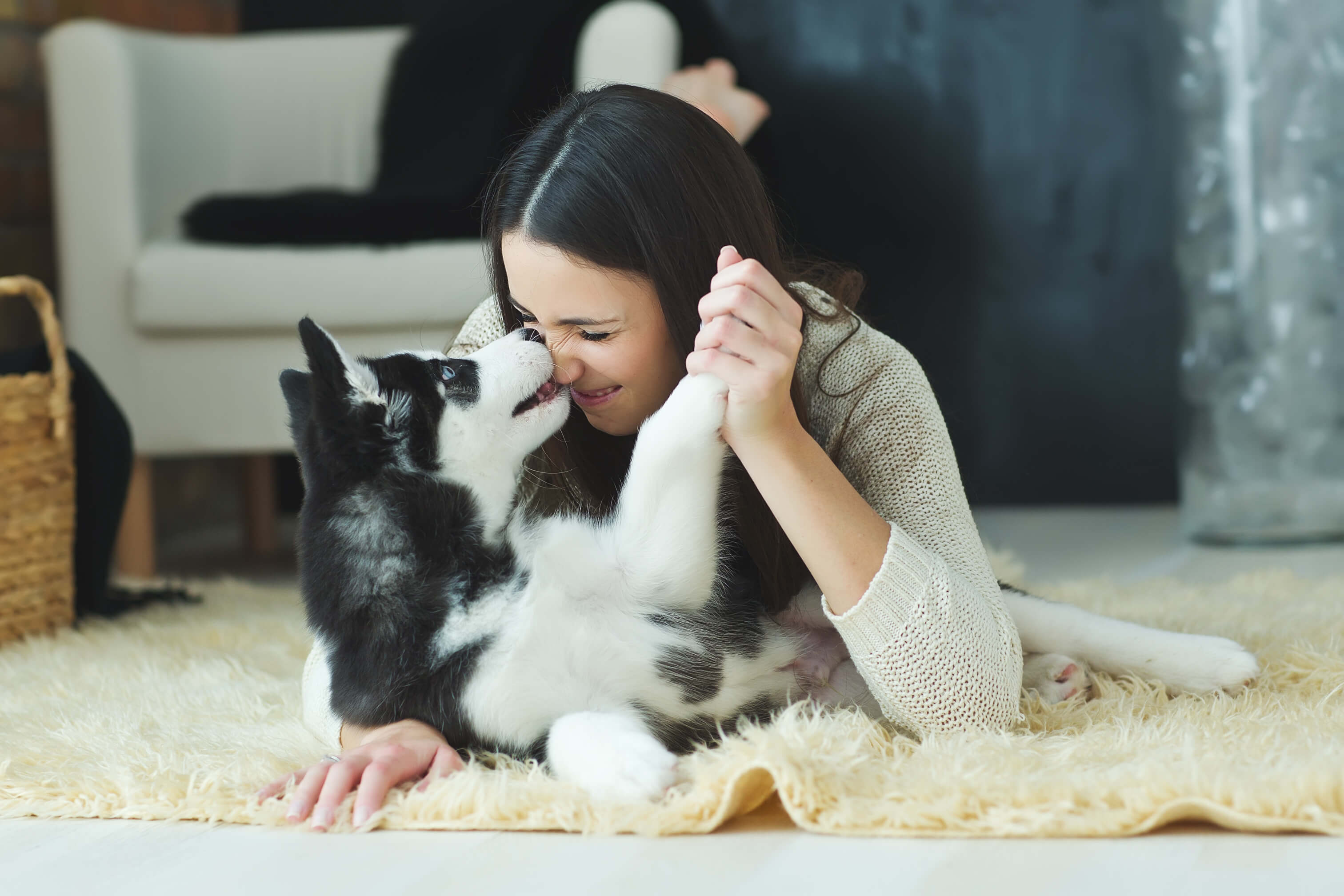 A brown-haired woman in a cream sweater laying on the floor and playing with her Siberian Husky puppy.
