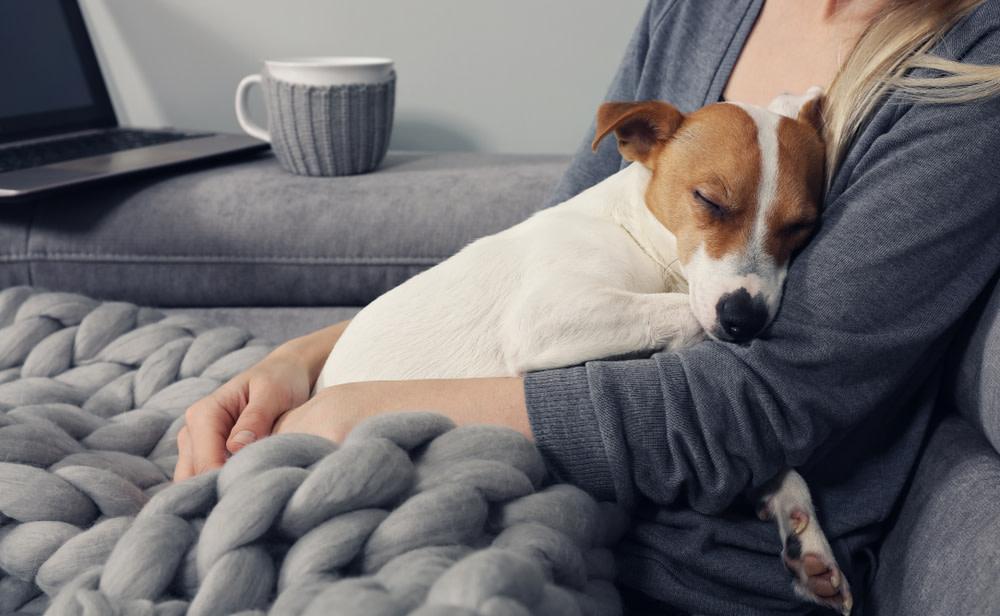 The Benefits of Calming Dog Treats
