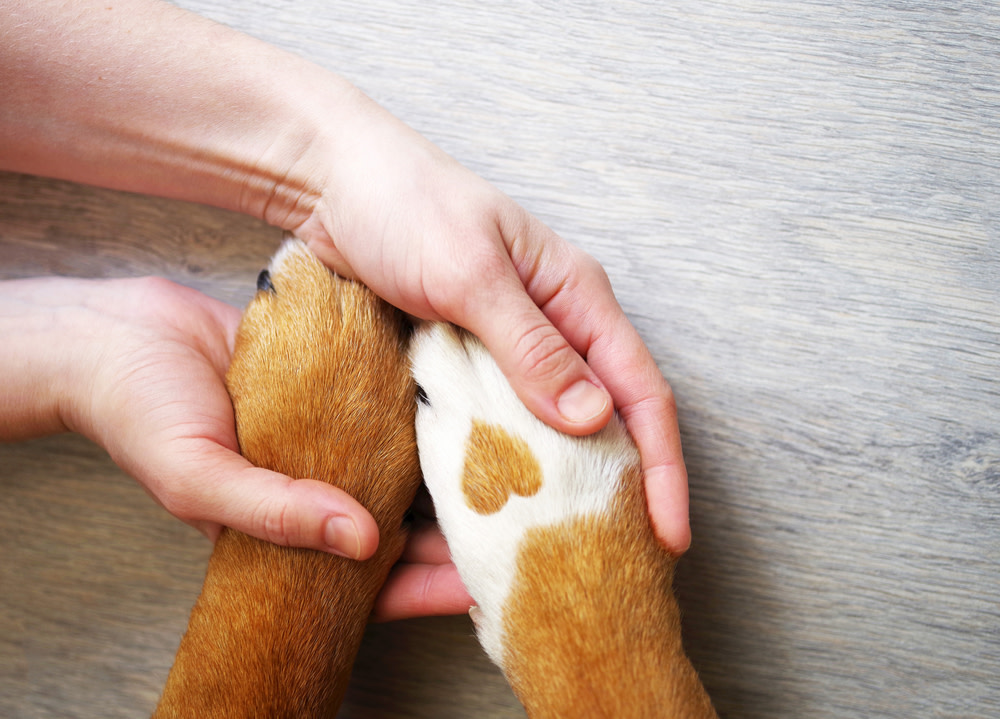 how to treat dog licking