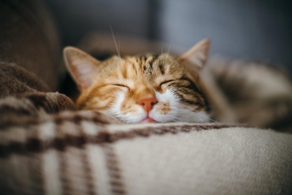 Benefits of CBD Oil Cat Treats