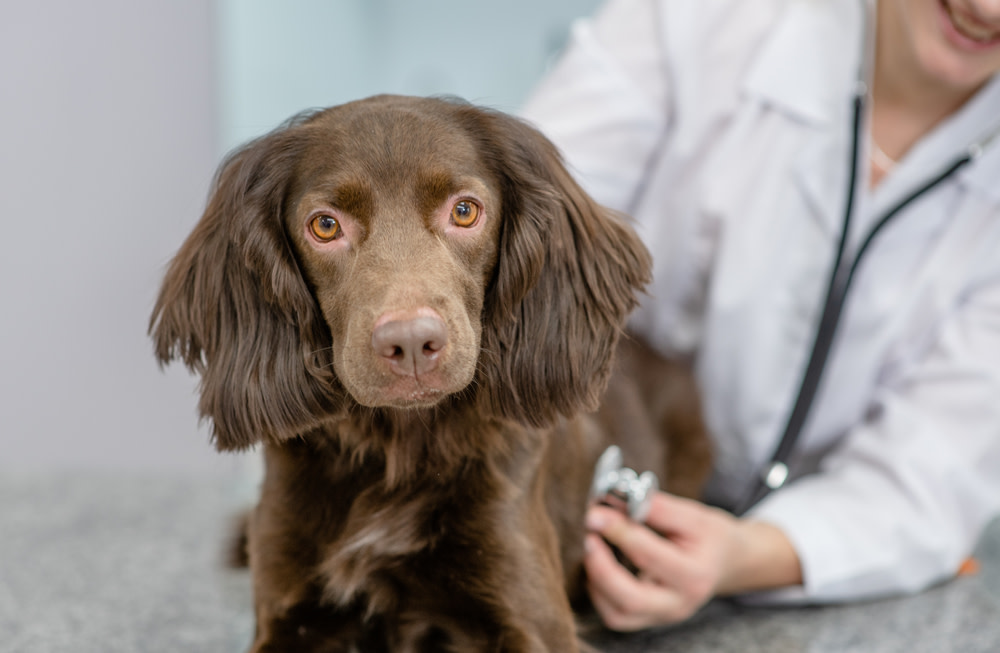 Diagnosing and Treating Your Dog