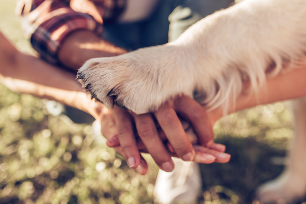 all hands together with dog paw