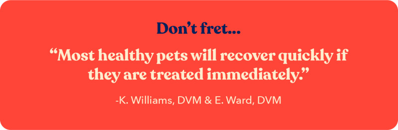Quote from K. Williams, DVM about how most healthy pets will recover from heat exhaustion if they are treated immediately