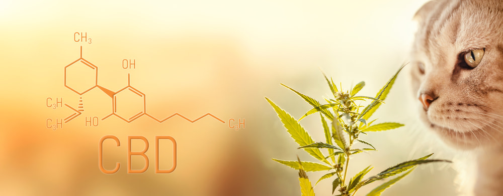 What is CBD for Cats