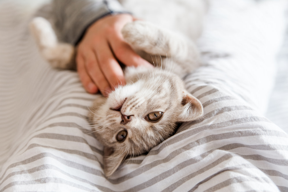 Ways to Help Your Grieving Cat