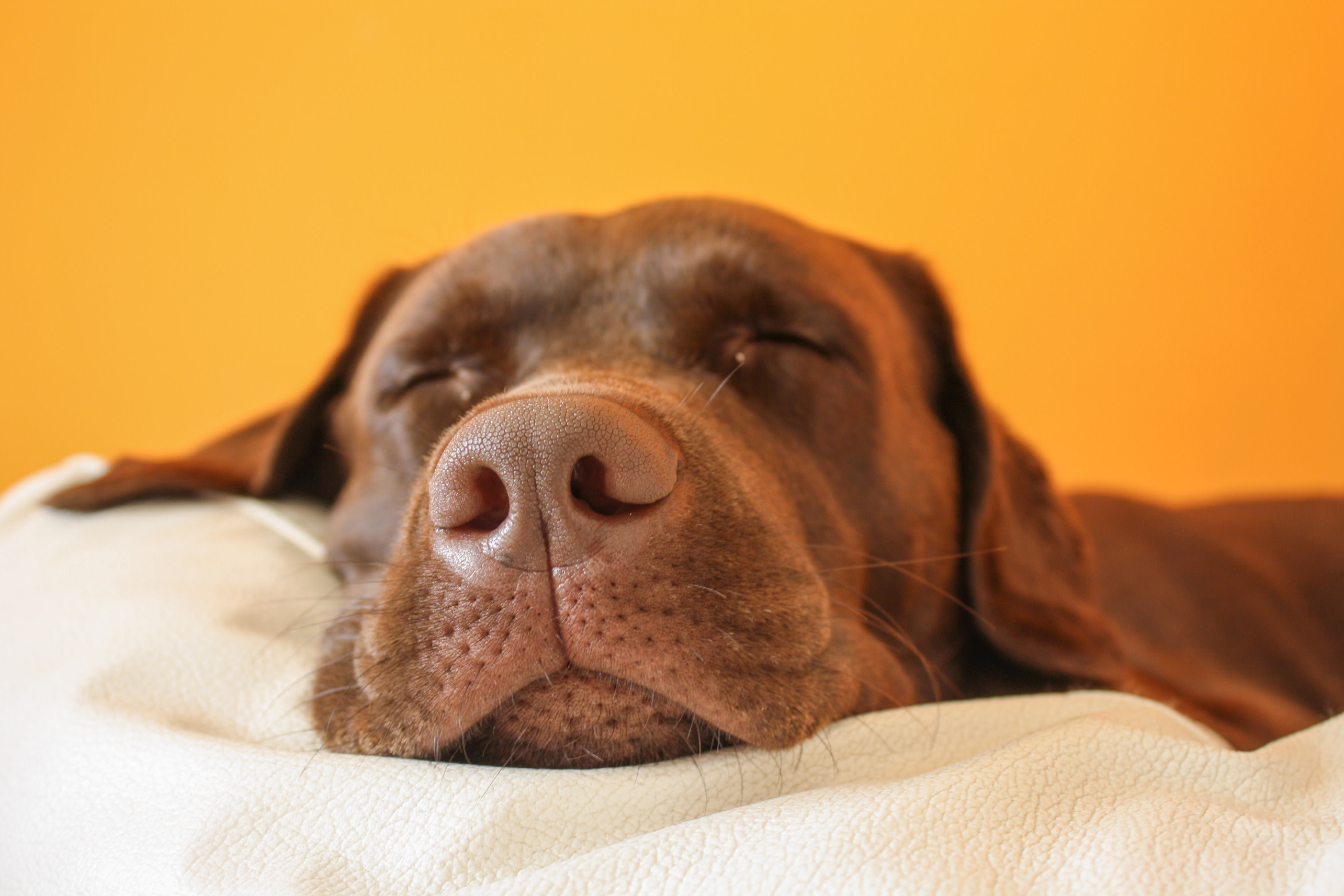CBD oil for stressed dogs
