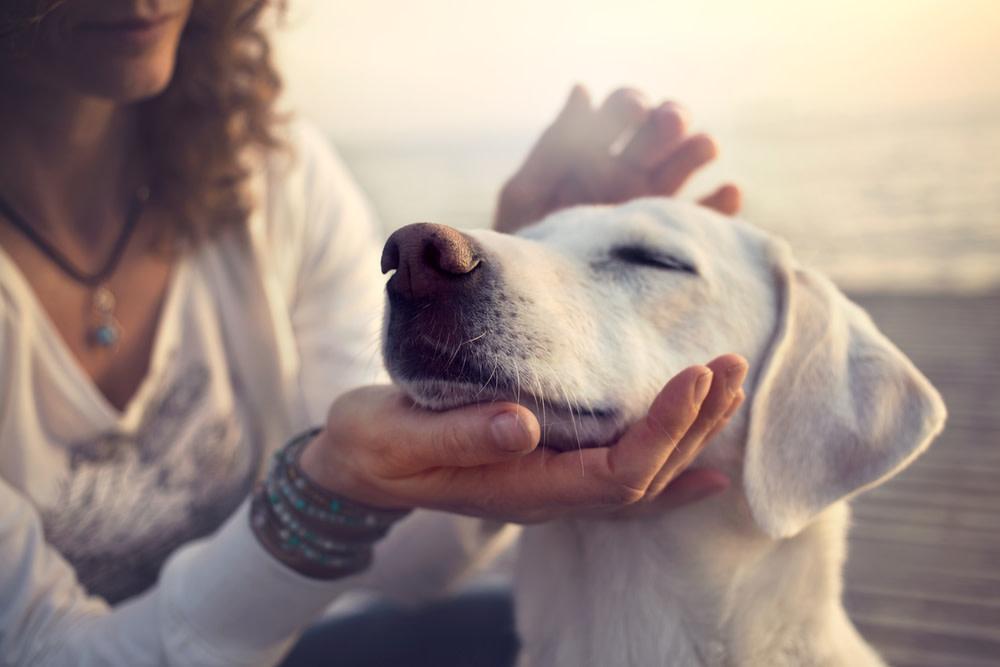 Maintaining Dog Digestive Health