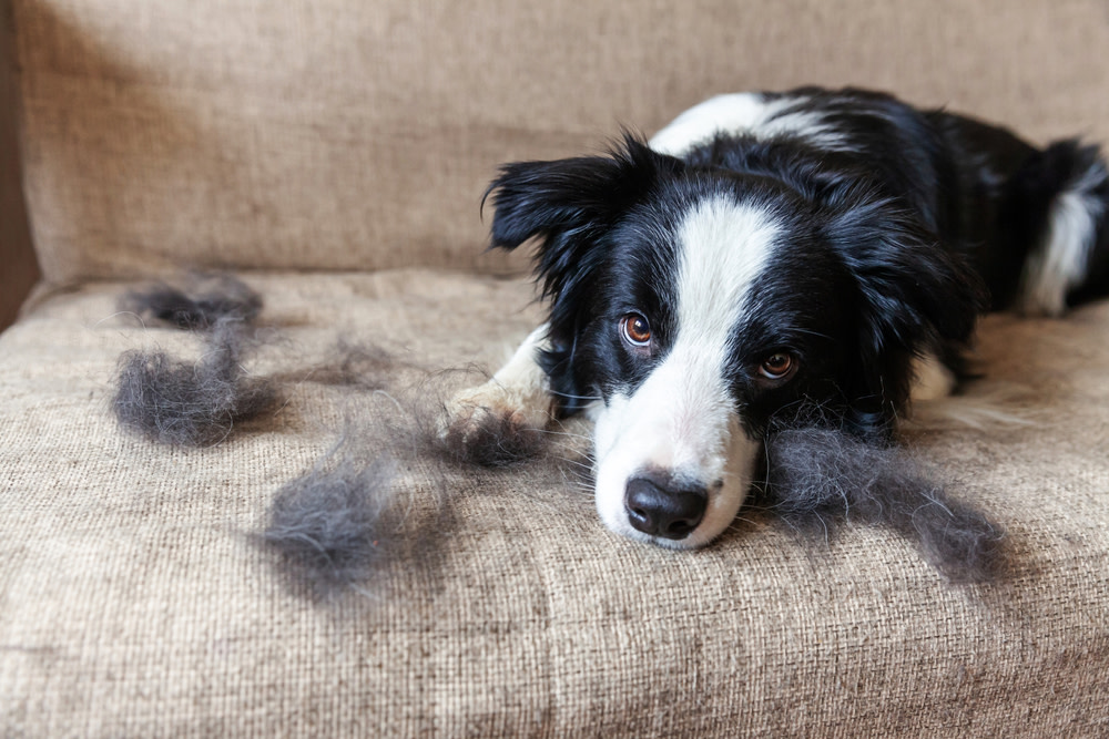remedies for dog hair loss