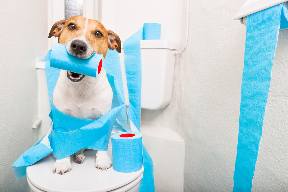 dog constipation remedies
