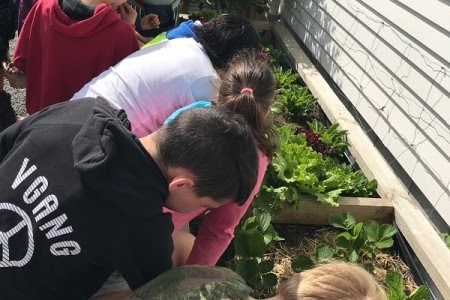Oropi School's gardens provide rich opportunities for cross-curricular learning