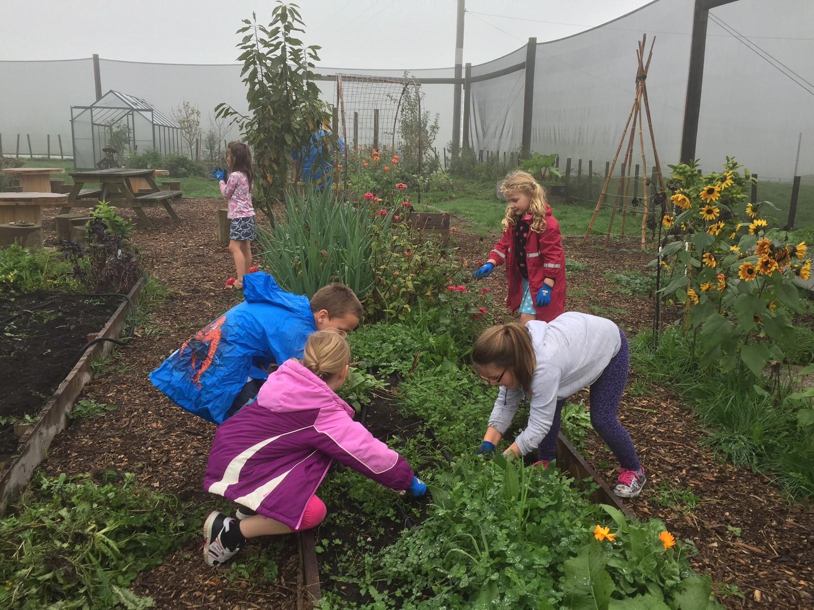 Children working together in the school vegetable garden